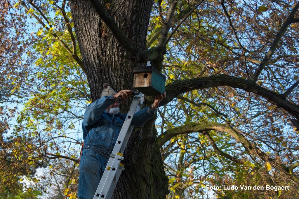 Bei einem Arbeitseinsatz am 13.11. wurden die Nistkästen kontrolliert, gereinigt und bei Bedarf repariert.
