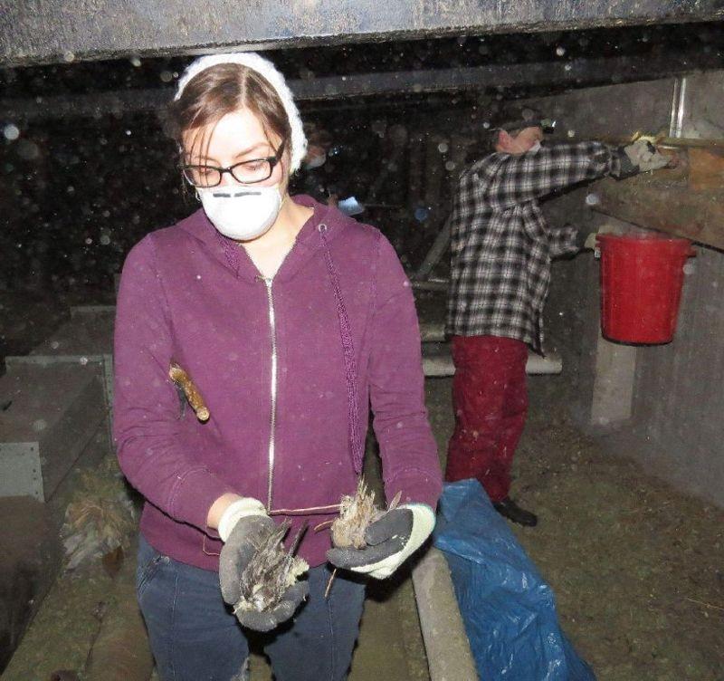 <p>Deshalb wurden bei den Arbeiten mehrere tote Mauersegler und andere Vögel gefunden.</p>Foto: Karsten Peterlein