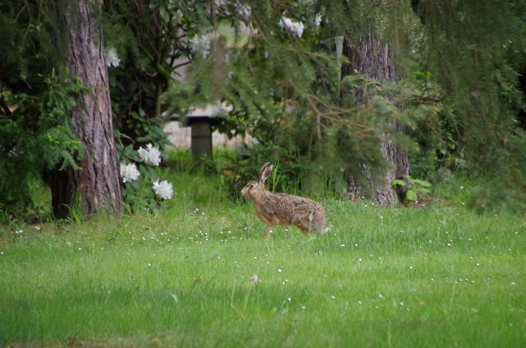 Auf dem Südfriedhof können sich buchstäblich Fuchs und Hase gute Nacht sagen. Sogar rehe kann man hier beobachten.