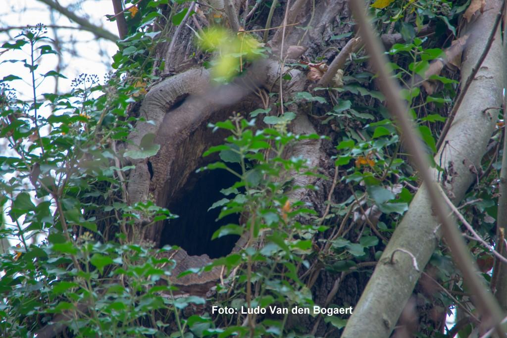 ...ausreichend große Höhlen geeignet.