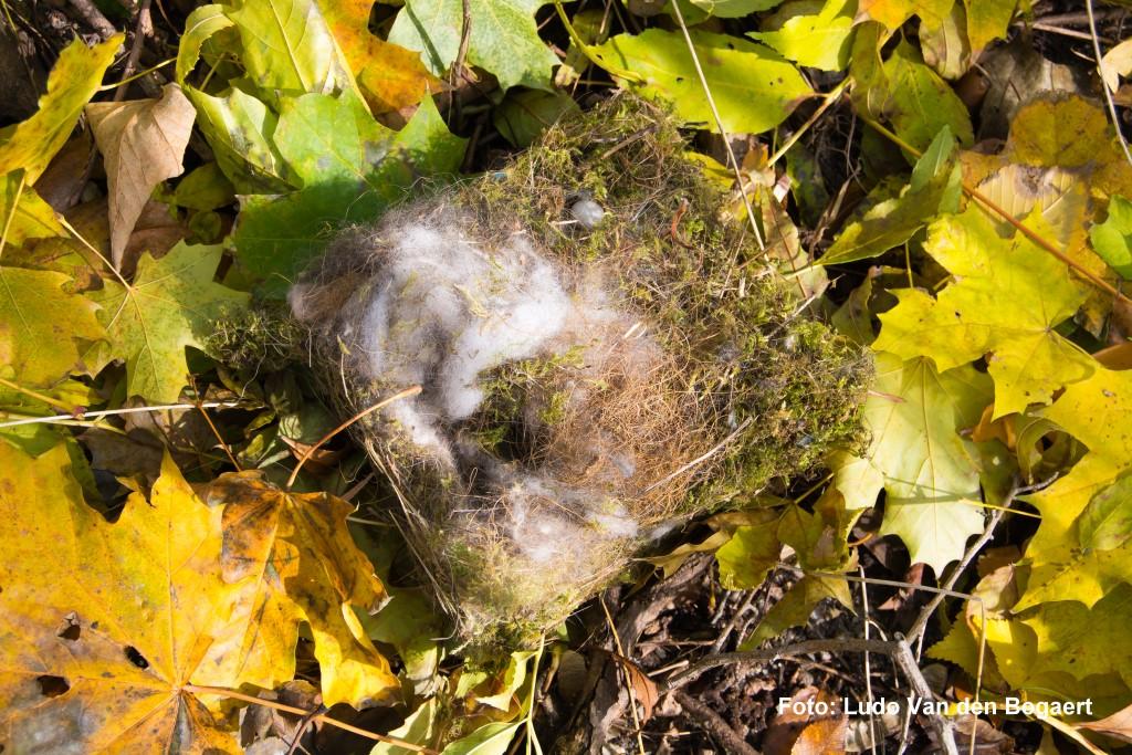 Nester verraten, dass in 16 Nistkästen in diesem Jahr gebrütet wurde.