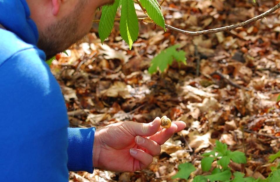 Frühlingsbote entdeckt: die Bänderschnecke