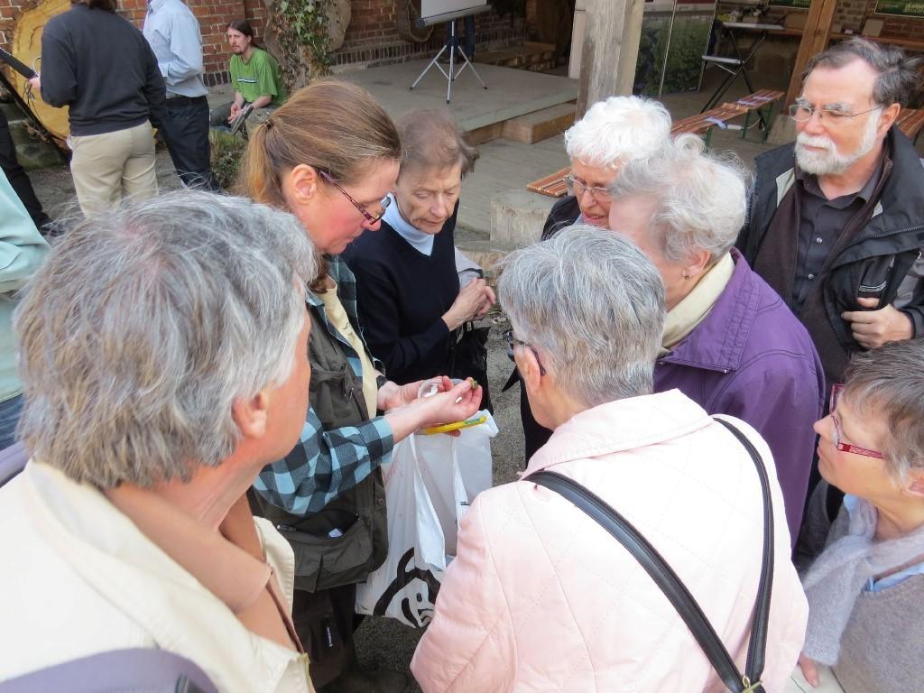 In der Veranstaltungspause nach den Vorträgen zeigte die Biologin Katrin Schniebs Weichtierpräparate aus der Sammlung des Dresdner Museums für Tierkunde. Foto: Karsten Peterlein