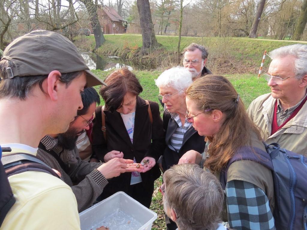 Bei der Weichtier-Exkursion konnten die Teilnehmer viele Schnecken oder Gehäuse von Weichtieren entdecken. Foto: Karsten Peterlein