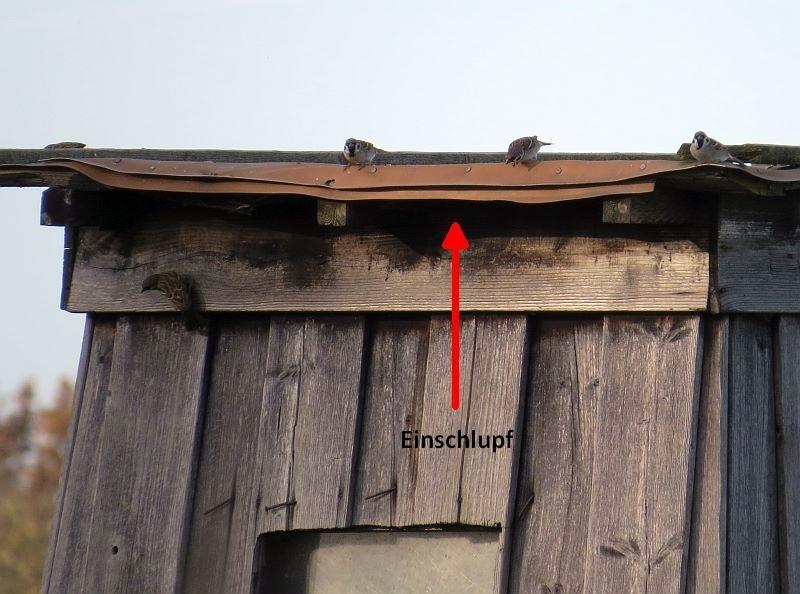 sondern auch eine Vogelfalle, weil die Tiere durch schmale Lücken schlüpfen, um nach Insekten zu suchen.