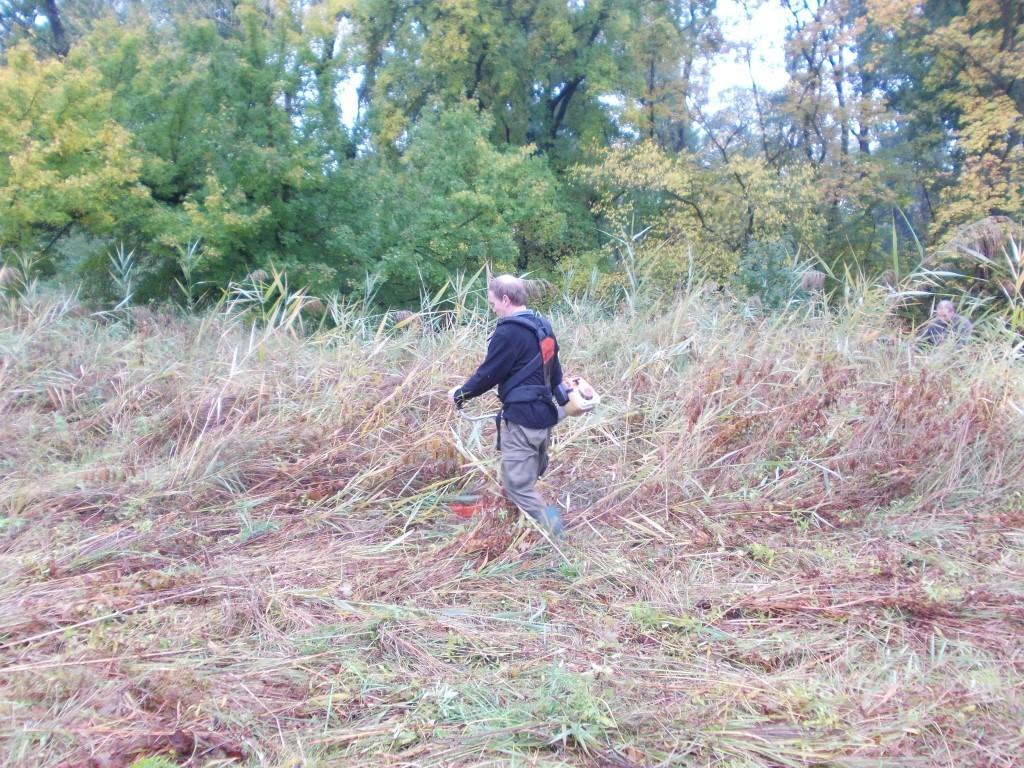 Die Feuchtwiese kann im kommenden Jahr also wieder neu erblühen...