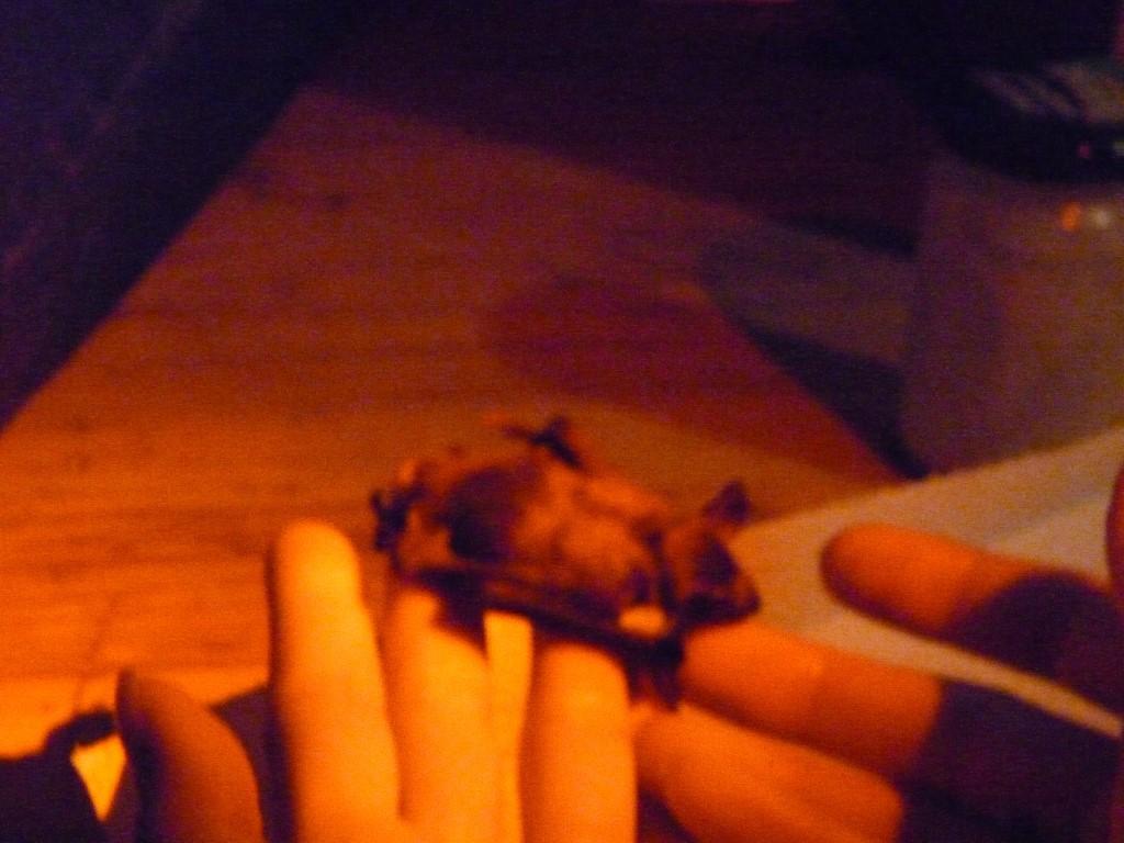 Mit desinfizierten Händen durften die Kinder die kleinen Fledermäuse sogar einmal anfassen.</p>Foto: NABU Leipzig