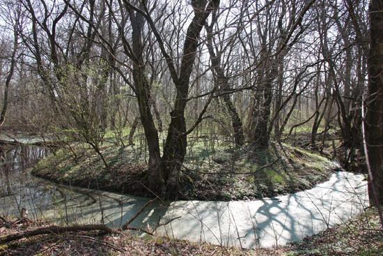 Frühling im Auwald. Foto: Maria Vlaic