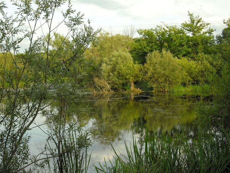 Die flachen Gewässer und die unterschiedlich feuchten Uferbereiche der Papitzer Lachen sind ein wertvoller Lebensraum für Tier- und Pflanzenarten, die an solche Umweltbedingungen angepasst sind.</p>Foto: René Sievert