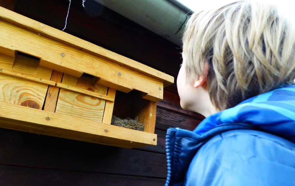 Bruterfolg im Koloniekasten: Hier hat Familie Kohlmeise ihren Nachwuchs mit Insektenlarven versorgt.