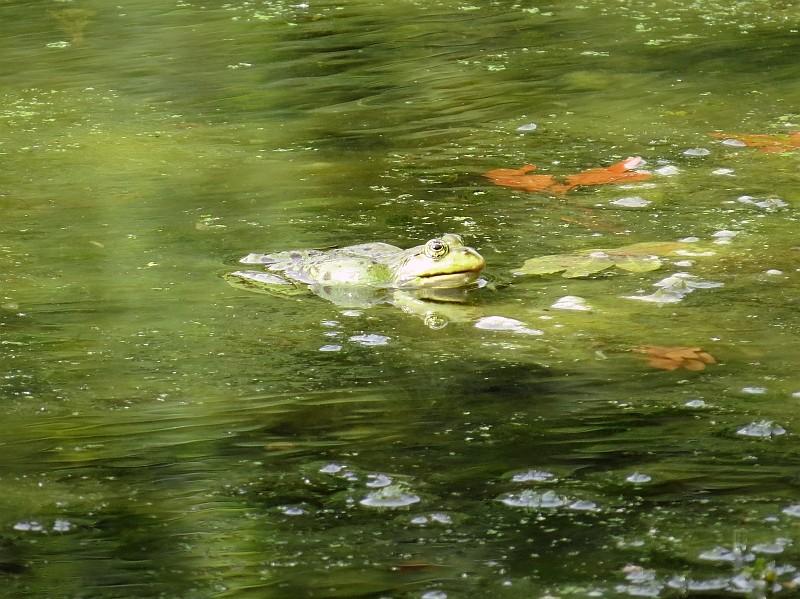 und zu Amphibienschutzprojekten des NABU Leipzig.