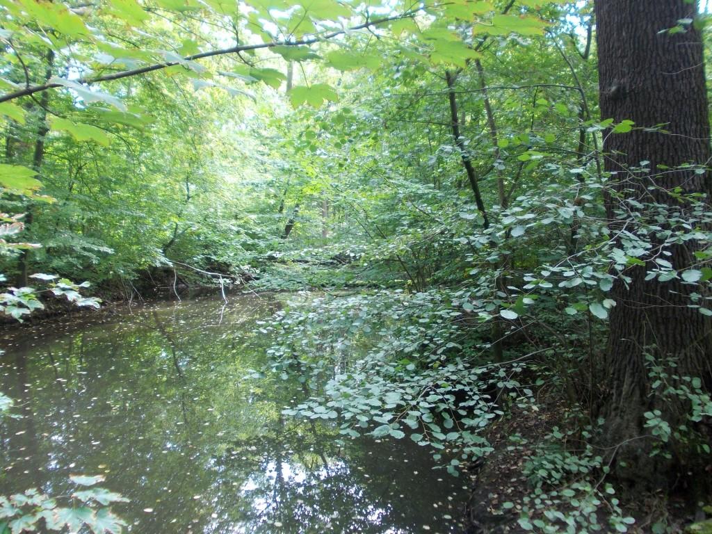 Bei der Radtour wurde auch die Pausnitz angesteuert, die teilweise angestaut wird, um einen Teil des Auwaldes zu vernässen.