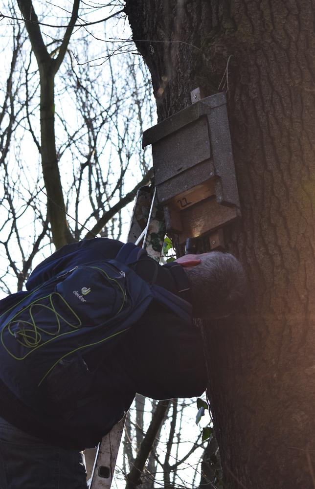 Neben den Vogelnistkästen hängen auch einige Fledermauskästen des NABU im Wildpark,