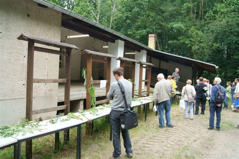Vor der Alten Wache waren einige Pflanzen aus dem Leipziger Auwald ausgestellt.<p/>Foto: René Sievert