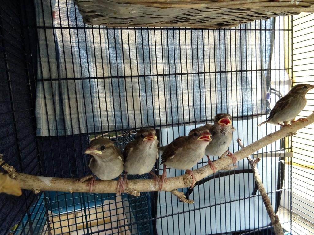Viele hungrige Vögel...