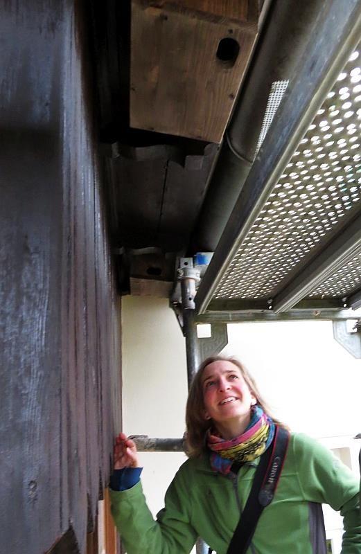 Die Hauseigentümerin freut sich über acht neue Nistplätze für Mauersegler.