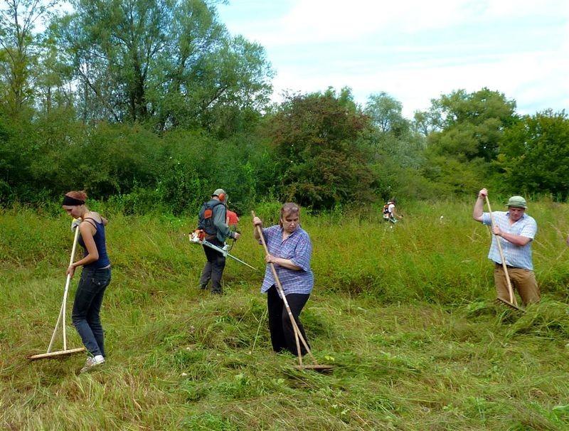Um zu verhindern, dass die wertvollen Wiesenflächen mit Büschen zuwachsen, müssen sie gepflegt werden. Unter anderem organisiert der NABU Leipzig deshalb alljährlich eine Wiesenmahd, bei der Naturfreunde tatkräftig helfen.</p>Foto: Karsten Peterlein