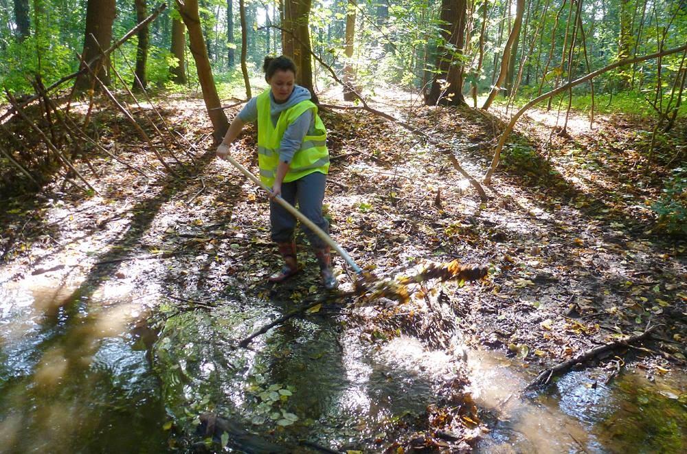 Äste und heruntergefallenes Laub können das fließende Wasser behindern.