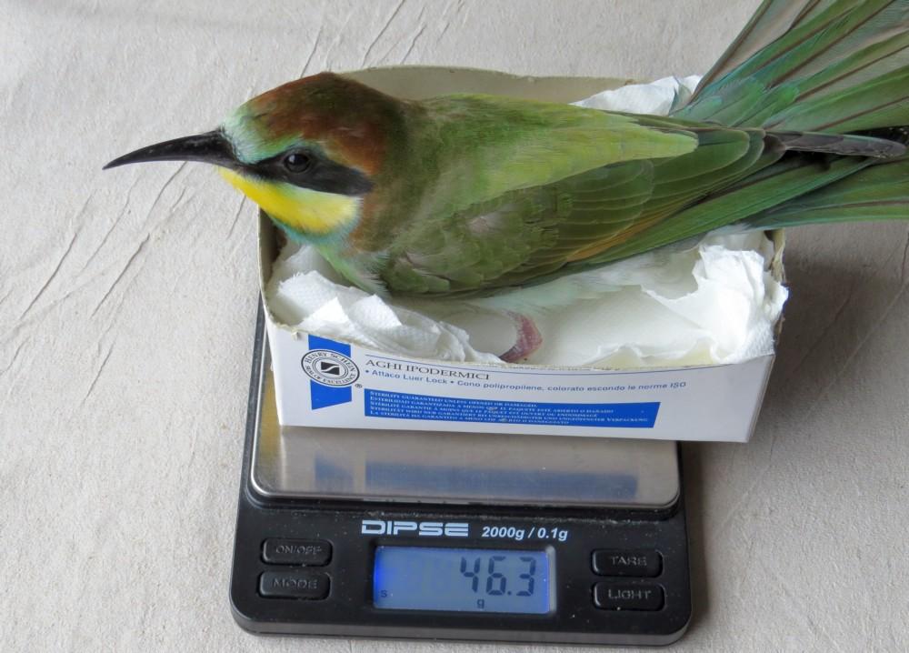 Optimale Gewichtszunahme.
