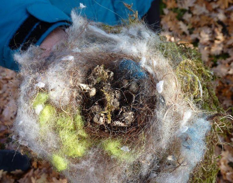 Auch diese Meisen haben das Nestlingsalter nicht überlebt.</p>Foto: Karsten Peterlein
