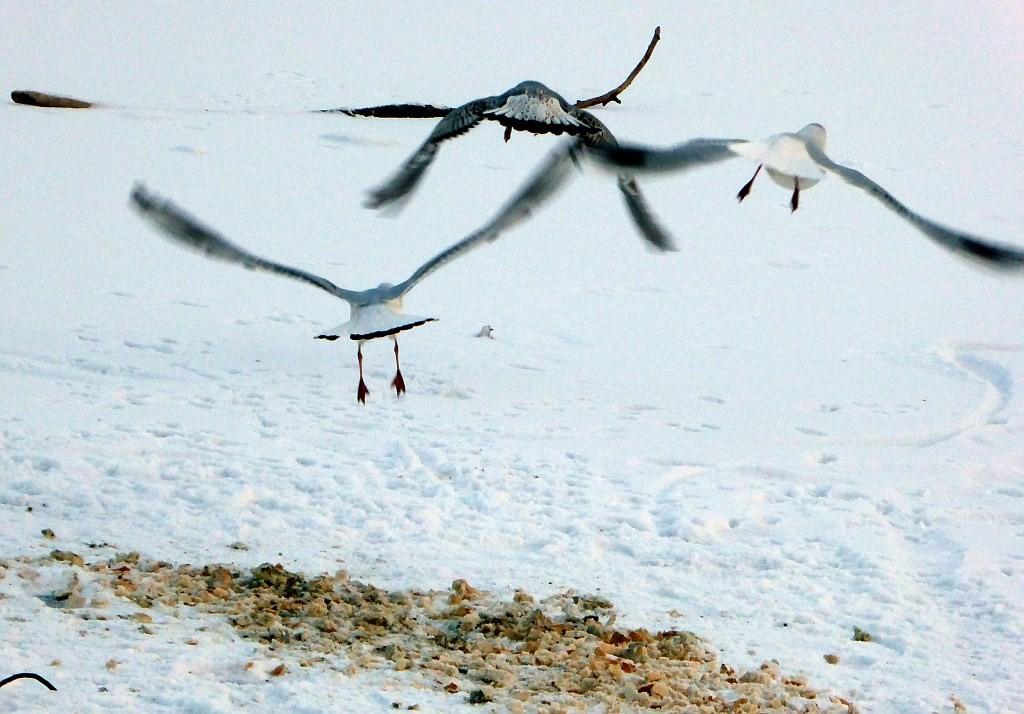 NABU-Mitstreiter haben das schimmlige Brot eingesammelt, um die Vögel zu schützen.