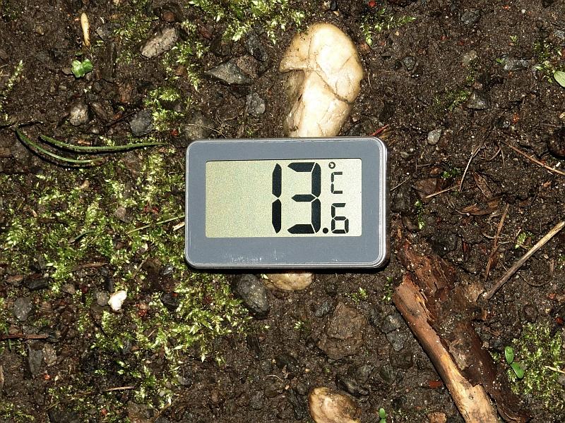 Gute Wanderbedingungen: 13,6 Grad nach Regentagen. </p>Foto: Karsten Peterlein