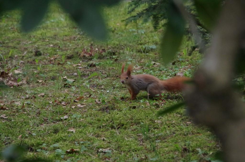Unzählige Eichhörnchen sind auf dem Südfriedhof unterwegs.