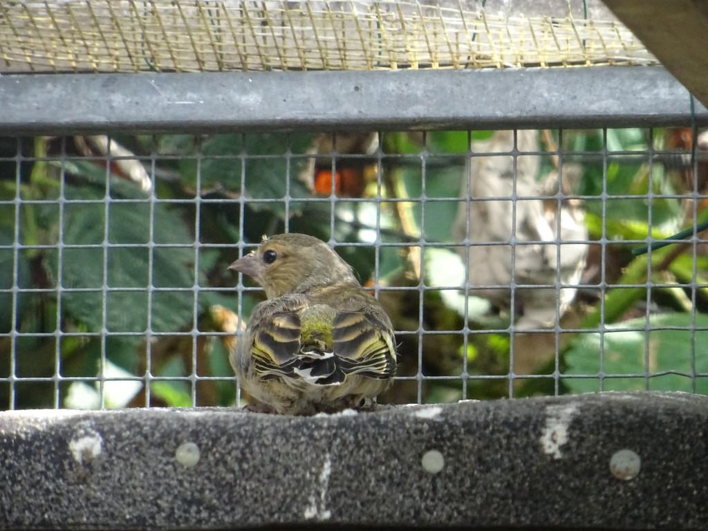 sind in der Wildvogelhilfe des NABU Leipzig zu versorgen,