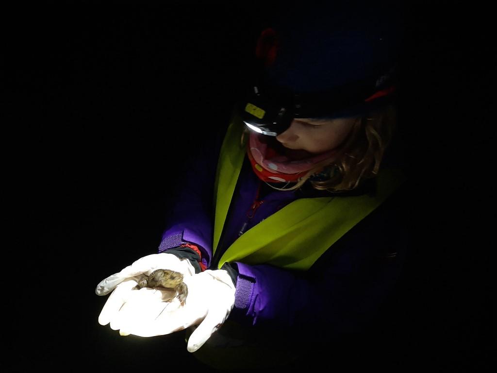 Amphibien retten ist spannend. Foto: Tina Frank