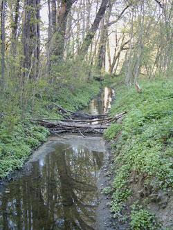 Die Östliche Rietzschke. Foto: Axel Zimmermann