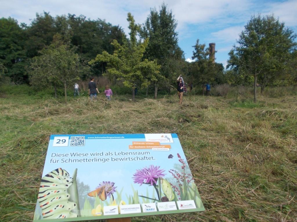 Aktionstag auf der NABU-Streuobstwiese in Knauthain. (Foto: René Sievert)