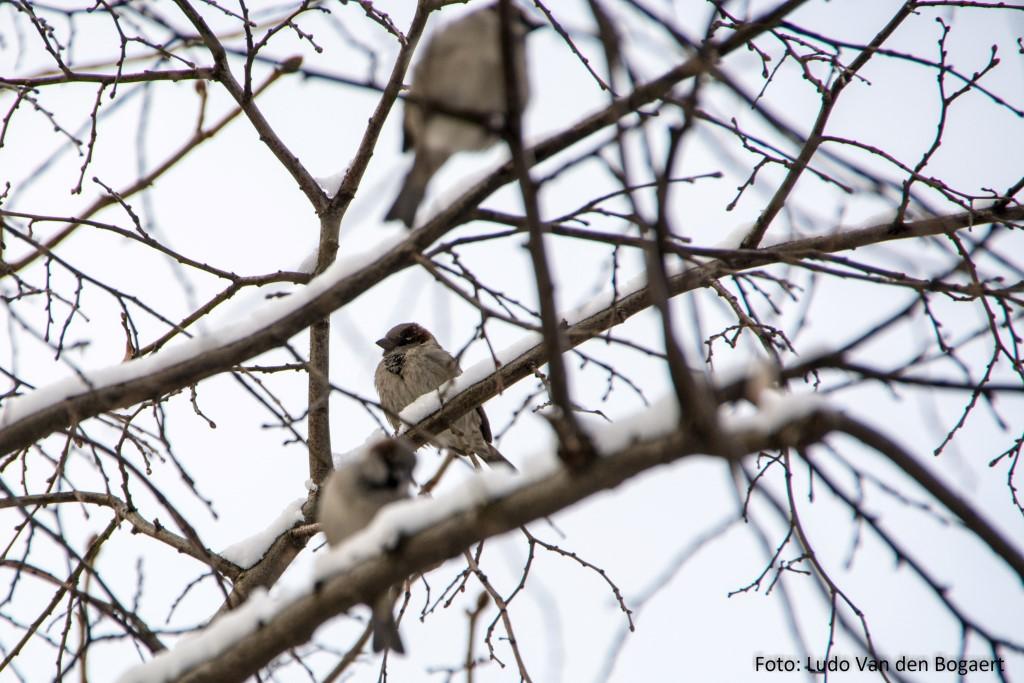 Vor allem in den für sie lebenswichtigen Hecken konnte man die Vögel entedecken.