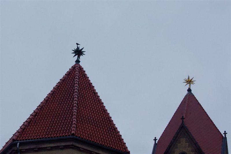 Ein Vogel auf dem Dach des Krematoriums - zur Artbestimmung war in vielen Fällen ein Fernglas nötig.