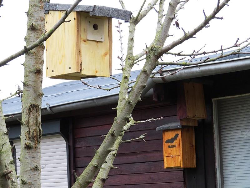 Nachbar der Fledermäuse: Der Blaumeistenkasten.