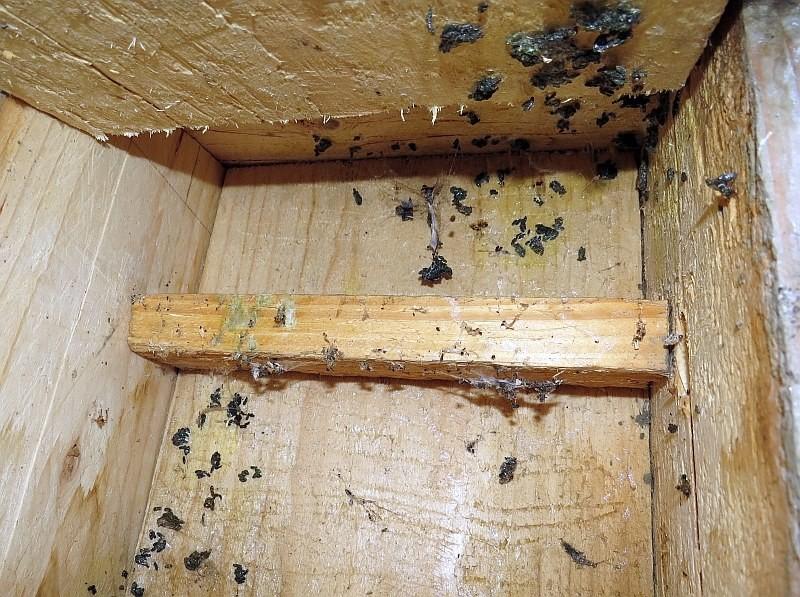 ...Nein, ausgeflogen. Aber es war offenbar ein Sommerquartier für Fledermäuse, der Kot deutet darauf hin.</p>Foto: NABU Leipzig