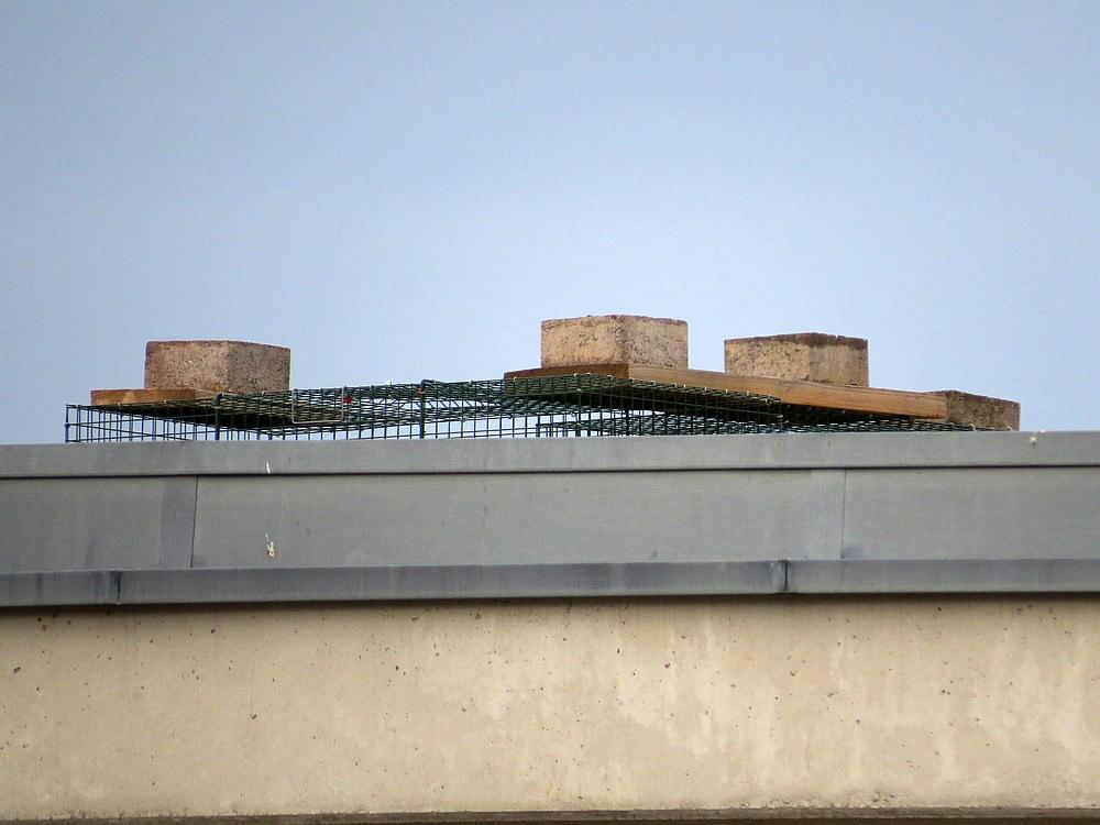 Auch diese illegale Vogelfalle wurde am Busbahnhof aufgestellt. Sie muss sofort entfernt werden.