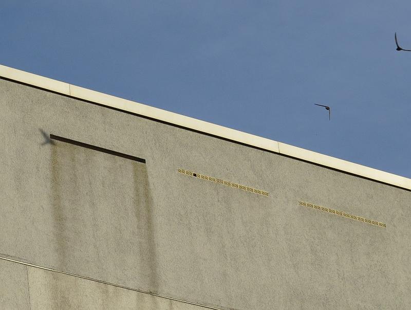 Hinter diesen Einflugschlitzen befinden sich Mauersegler-Nistkästen, die vom NABU Leipzig betreut werden.