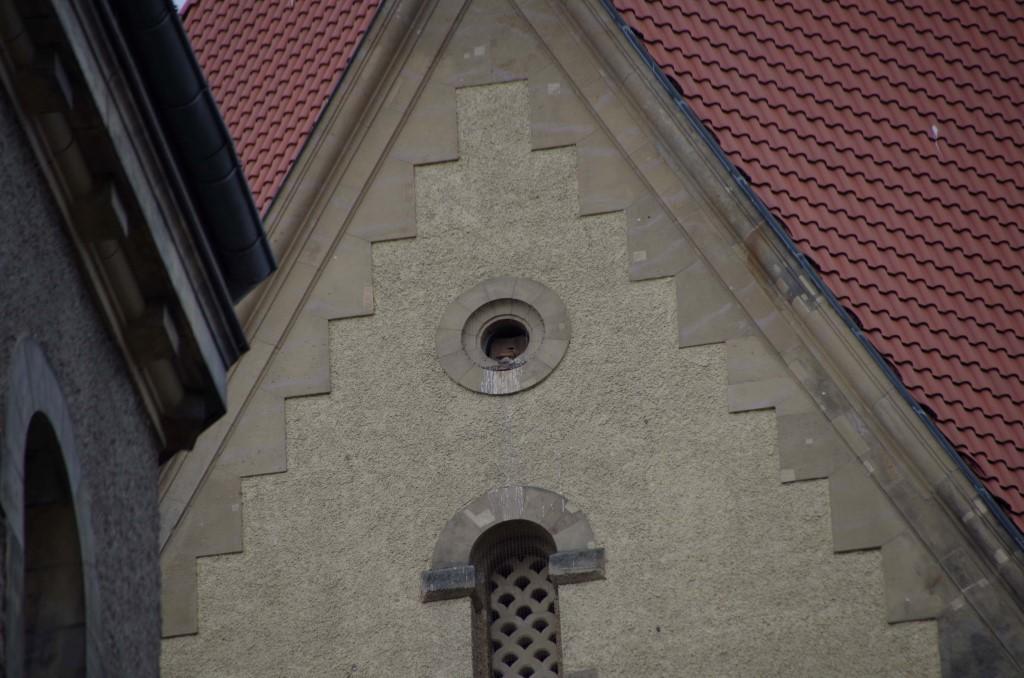 Im Glockenturm des Krematoriums sind auch Turmfalken zuhause. Im Nistkasten auf einer anderen Turmseite sind Dohlen eingezogen.