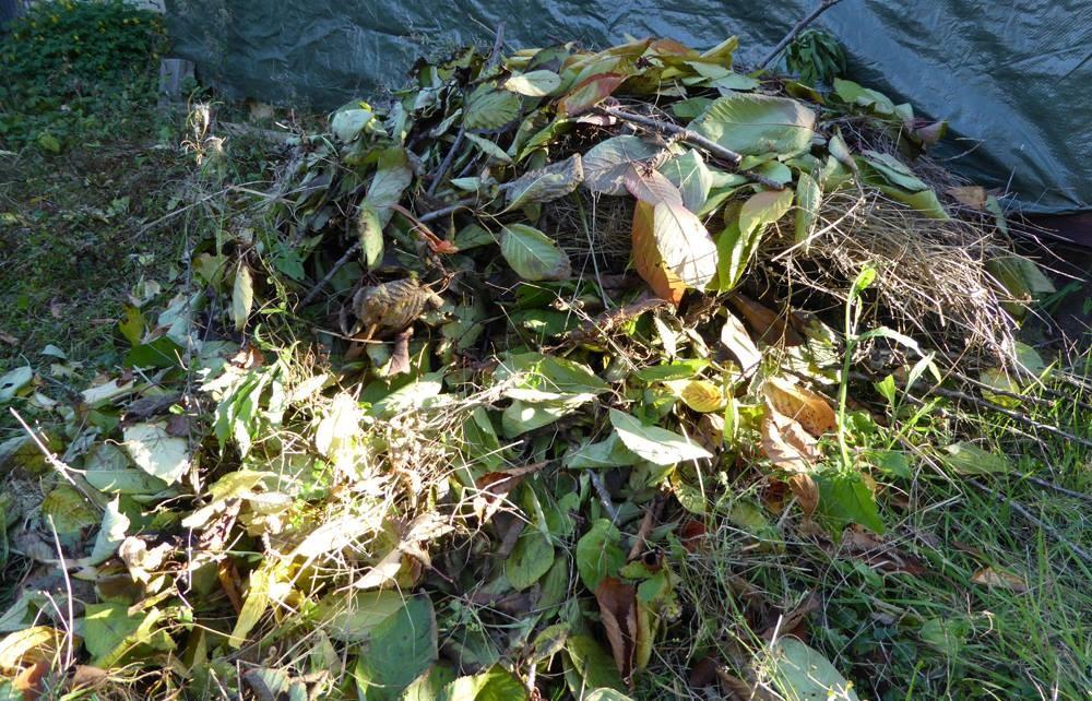 Aus Verschnitt und Laub der Kirschbäume wurde Haufen angelegt. Eine weitere Unterschlupfmöglichkeit im Garten, zum Beispiel für einen Igel.