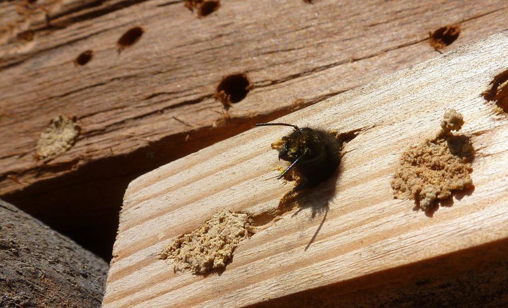 Die Bienen sind fleißig.