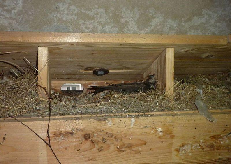 Auch in einigen Nestern wurden tote Vögel entdeckt.