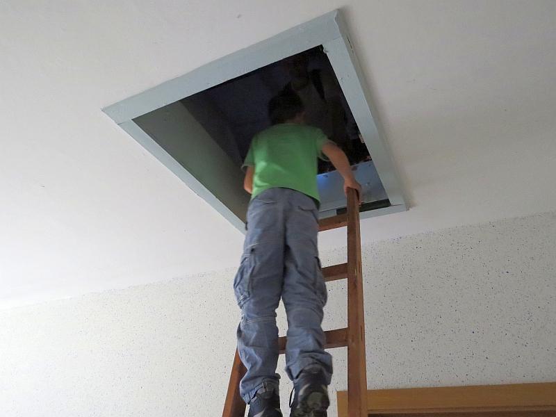 Aufstieg ins Dach zu der Brutkolonie.