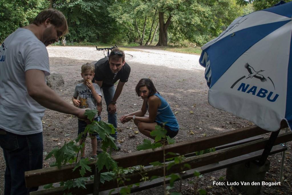 Dabei konnte man auch erfahren, warum der Spitzahorn größere Blätter hat als der Feldahorn. </p>Foto: Ludo Van den Bogaert