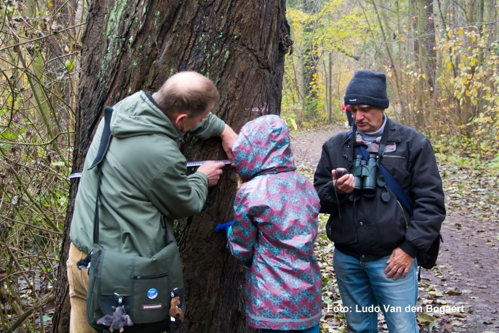 Die Höhlenbäume werden vermessen.