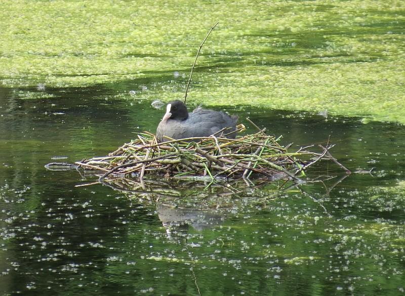 Wasservögel konnten beobachtet werden, die in der Großstadt häufig keine idealen Nistplätze finden.