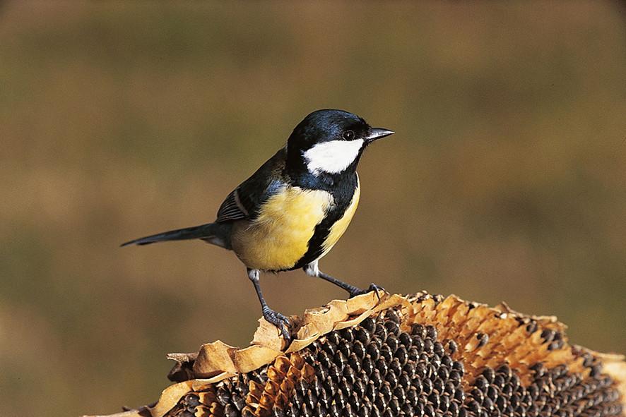 Al descubrimiento de las pájaros