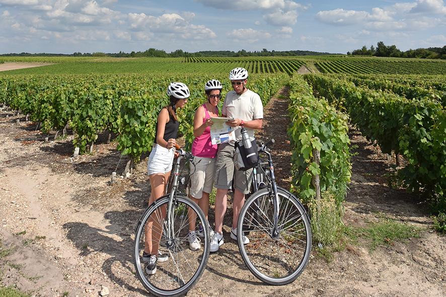 Camping Sites & Paysages  Les Saules à Cheverny - Loire Valley - Balade en vélo à travers les vignobles du Val de Loire