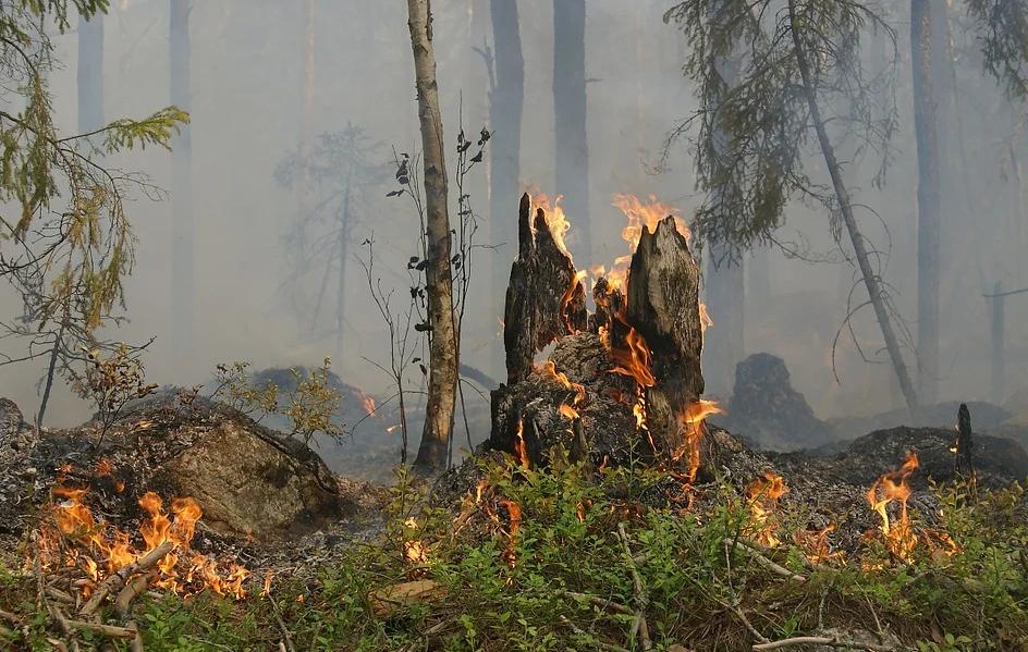 Waldbrandschutz-Verordnung 2021