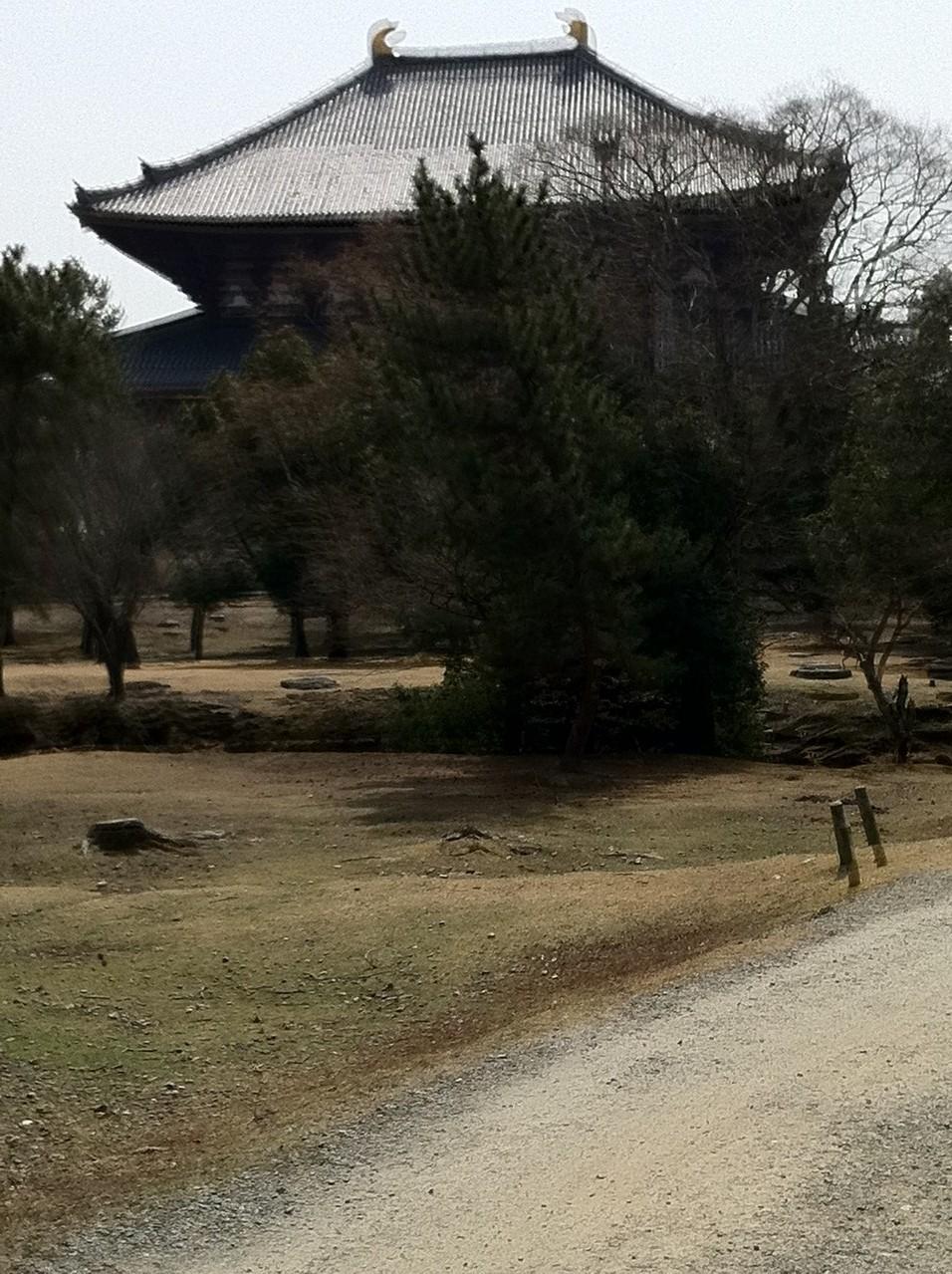 正倉院から望む大仏殿(大仏殿を北西から見るのは初めてでした。)