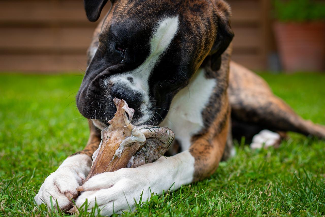 Hunde-Irrtümer